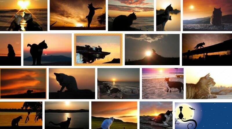tramonti gatti e gatti al tramonto