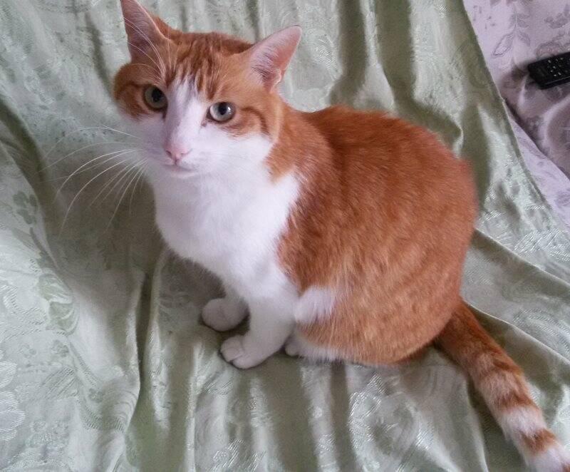 Il gatto Tobia