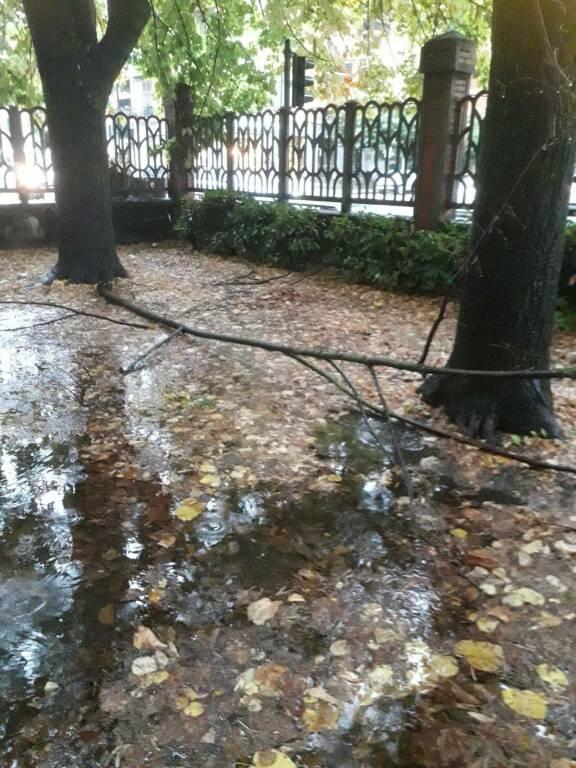 Il ramo caduto