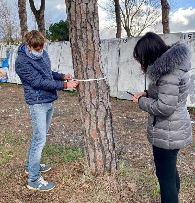 Le indagini degli agronomi sugli alberi sarzanesi