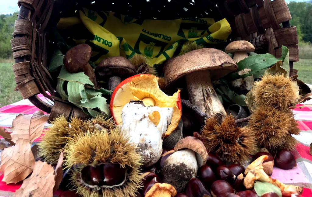 Funghi e castagne